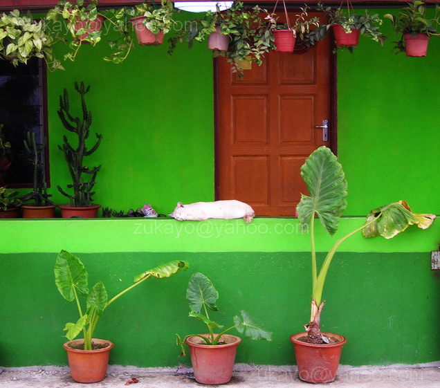 Photograph Green House by Zulkifle Che Abdullah on 500px