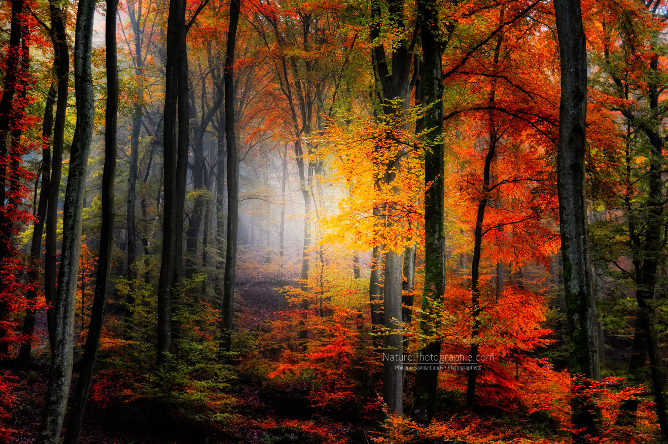 Photograph Light Colors by Philippe Sainte-Laudy on 500px
