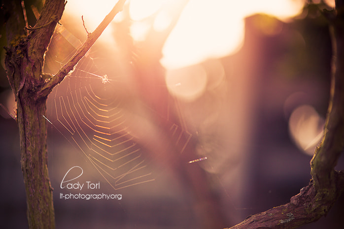 Photograph Sunkissed by Lady Tori  on 500px