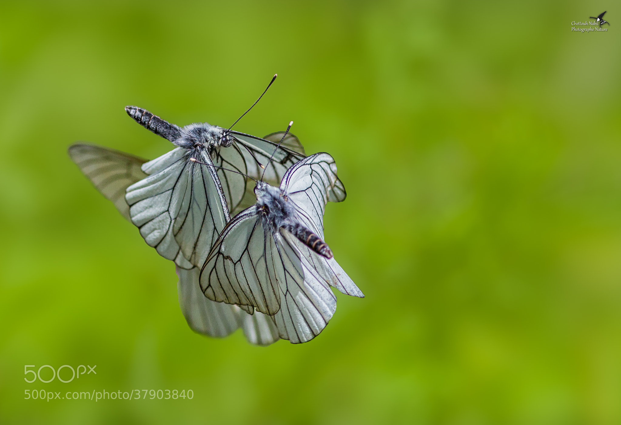 Photograph Butterfly by Nabil CHETTOUH on 500px