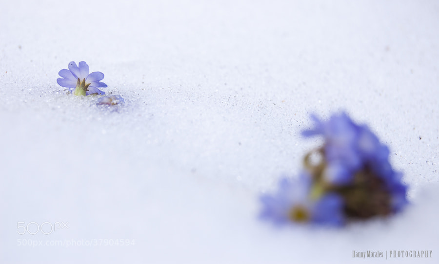 Photograph Survivors in the snow I by Hannelore  on 500px