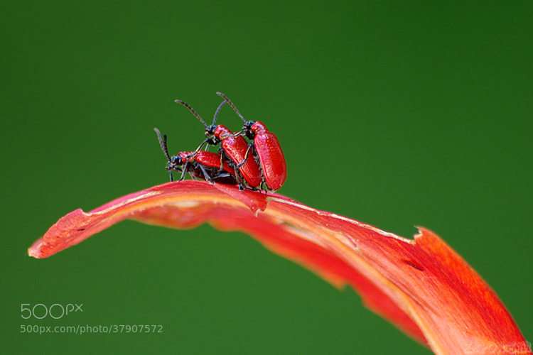 Photograph Buggyback Ride by Vie Lipowski on 500px