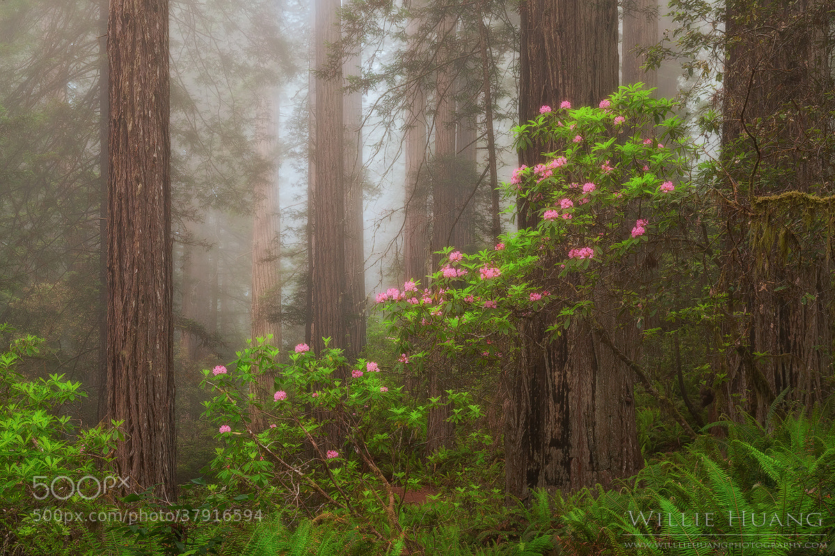 Photograph Flowering Among Giants by Willie Huang on 500px