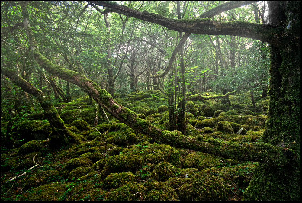 Photograph Forest by Michal T. on 500px