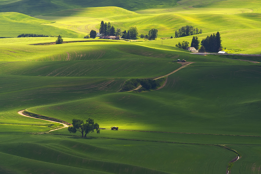 Photograph Shades of Green by Andrew J. Lee on 500px