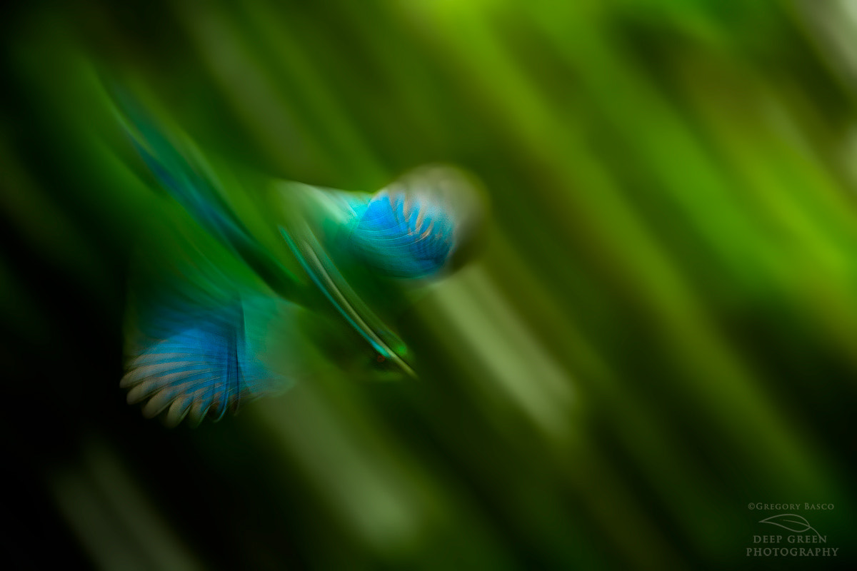 Photograph Motmot Motion by Deep Green Photography on 500px