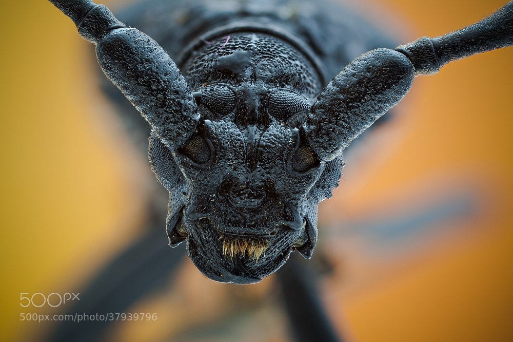 Photograph Alien by David Chambon on 500px