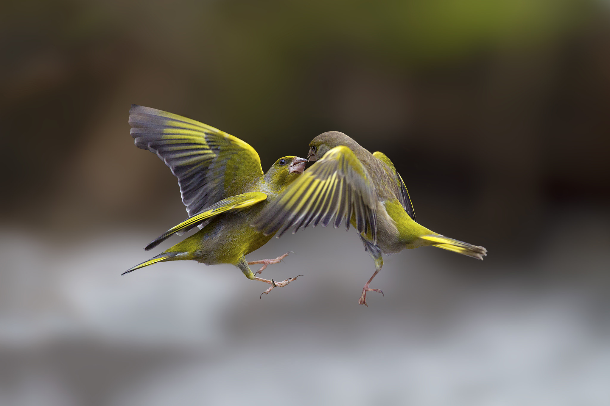 Photograph Flying Kiss 5 by Marco Redaelli on 500px