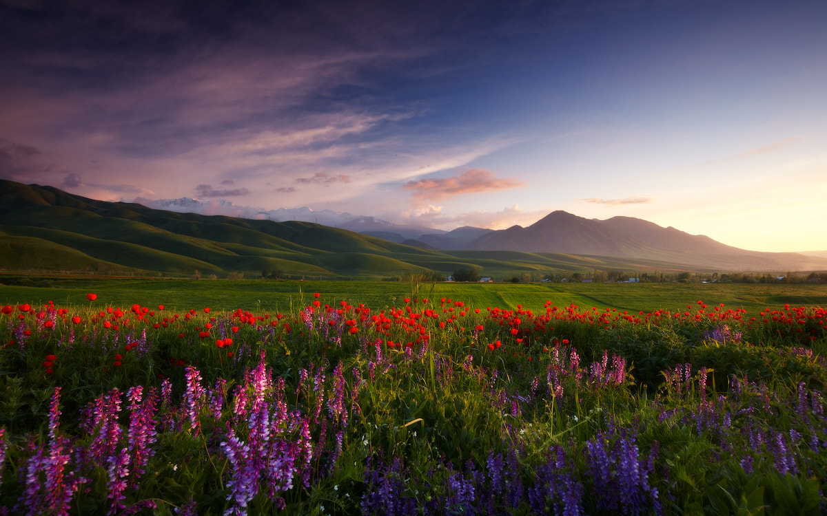 Photograph Careless Time of Spring by Lazy Vlad on 500px