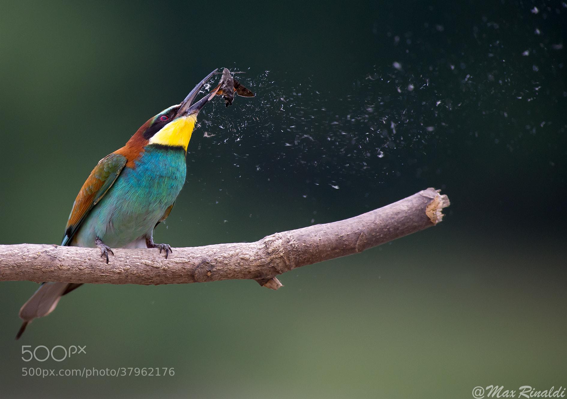 Photograph Shake it! by Max Rinaldi on 500px