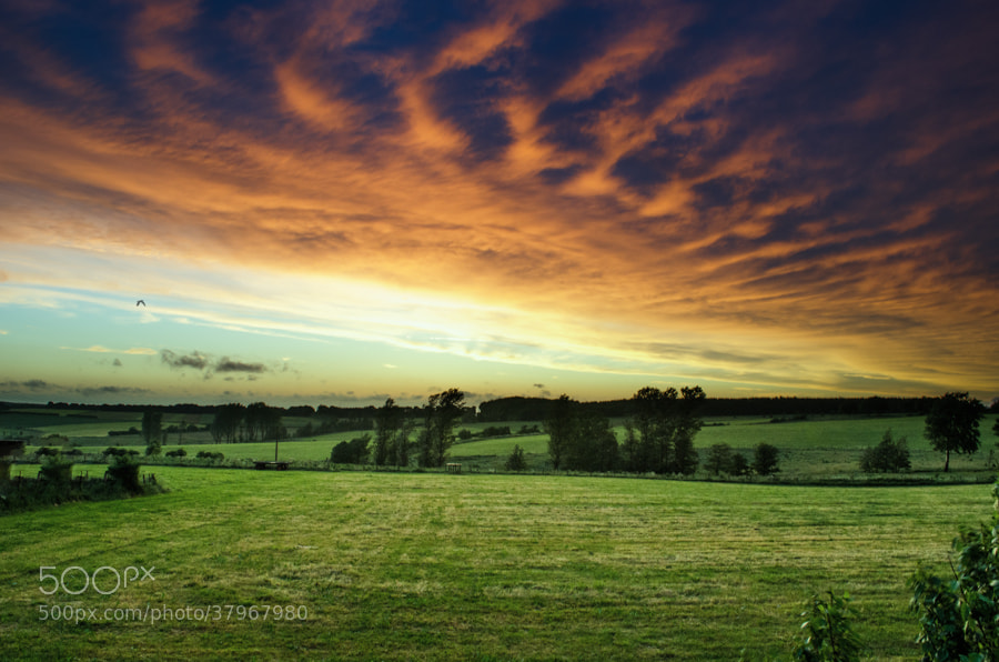 Photograph green sunset by Gunter Werner on 500px