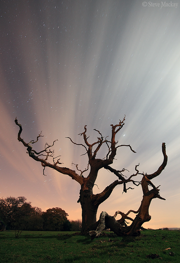 Photograph Dead Tree at Night by Steve Mackay on 500px