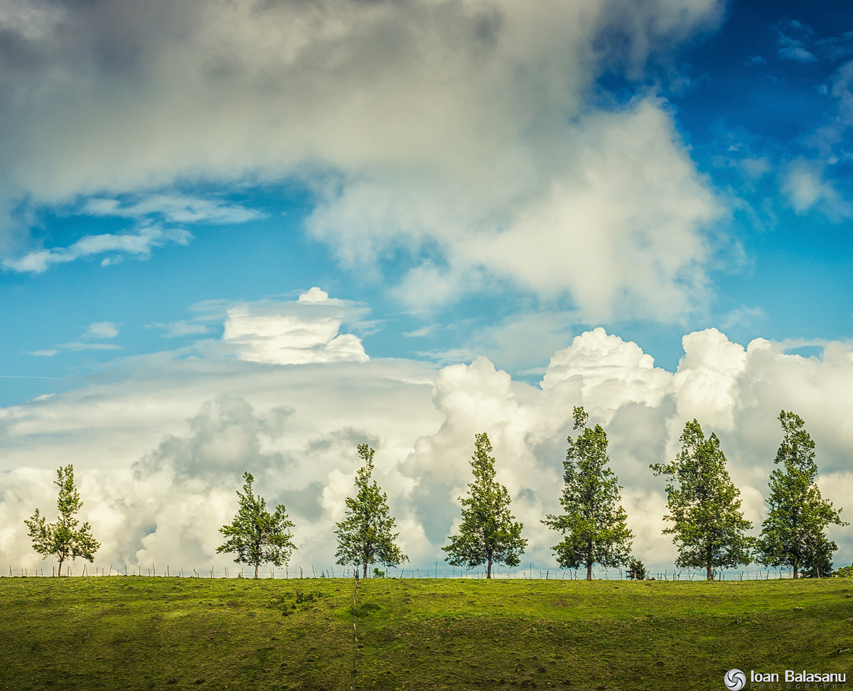 Photograph Trees and their dreams by Ioan Balasanu on 500px