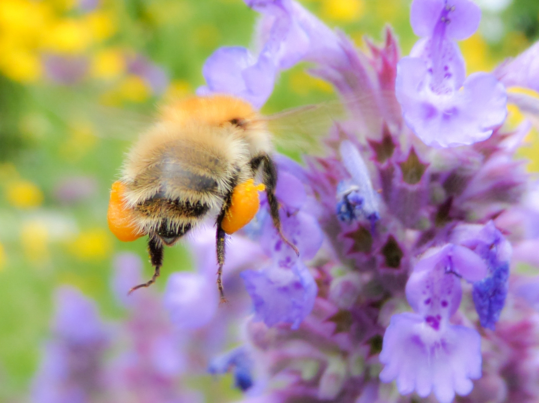 Photograph Bee work by Florian Bonhoure on 500px