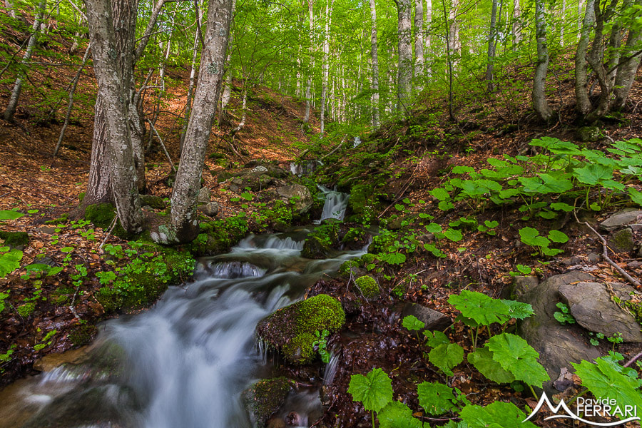 Photograph Spring Stream by Davide Ferrari on 500px
