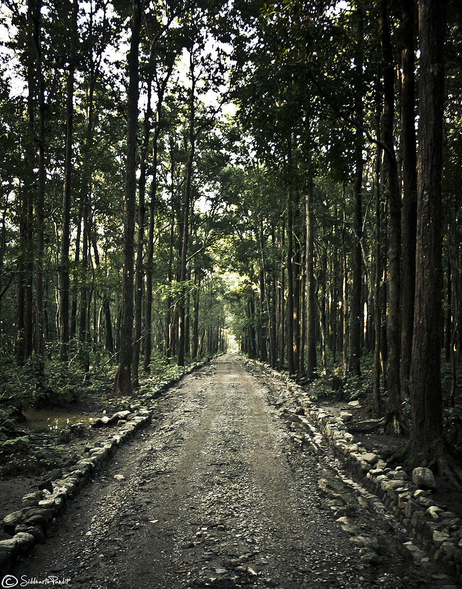 Photograph Walking the lonely road by Siddharth Pandit on 500px