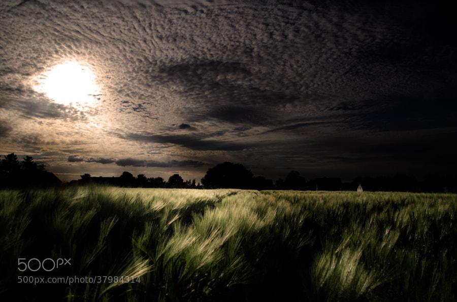 Photograph dark corn field by Gunter Werner on 500px