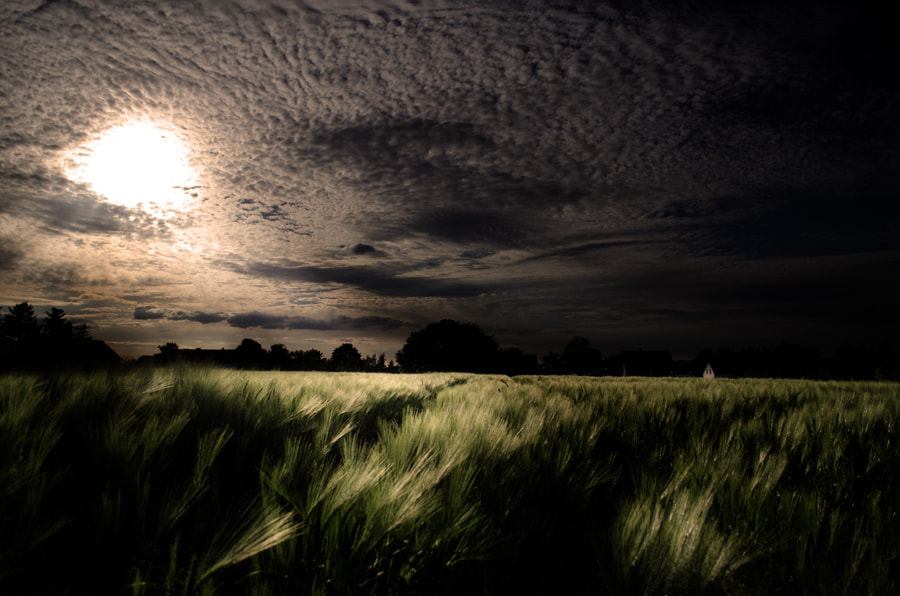 Photograph dark corn field by Gunter Werner on 500px