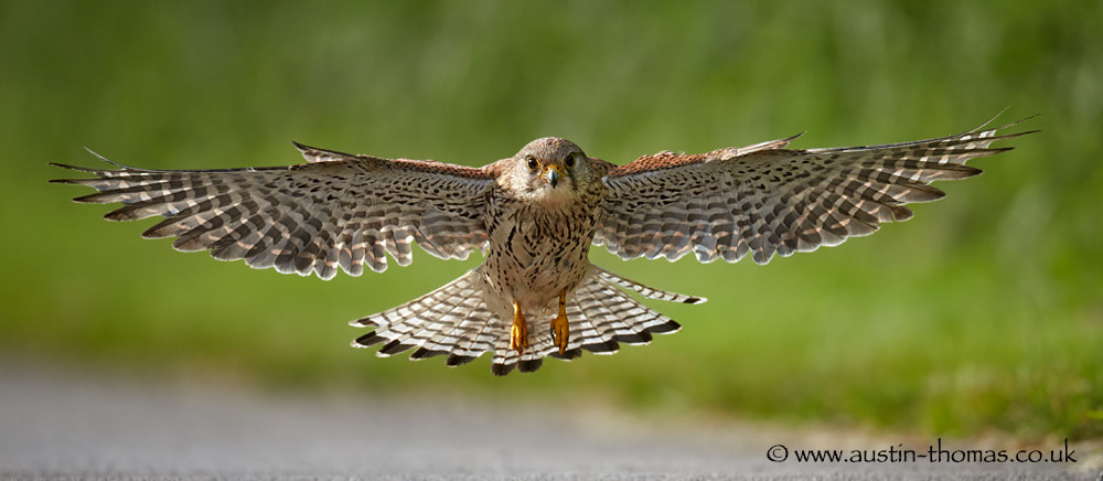 Photograph Flying right at you... by Austin Thomas on 500px