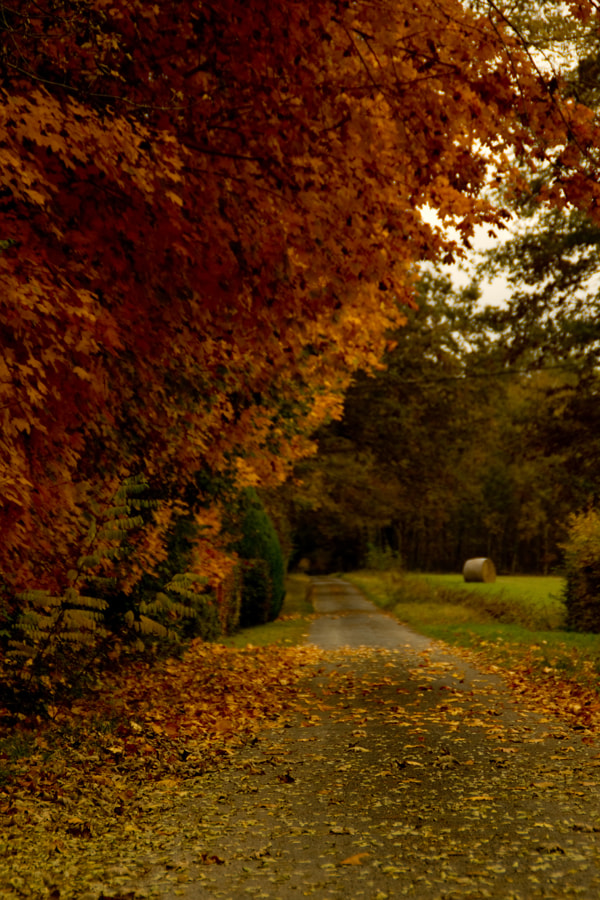 Photograph collection automne#6 by PETIT Olivier on 500px