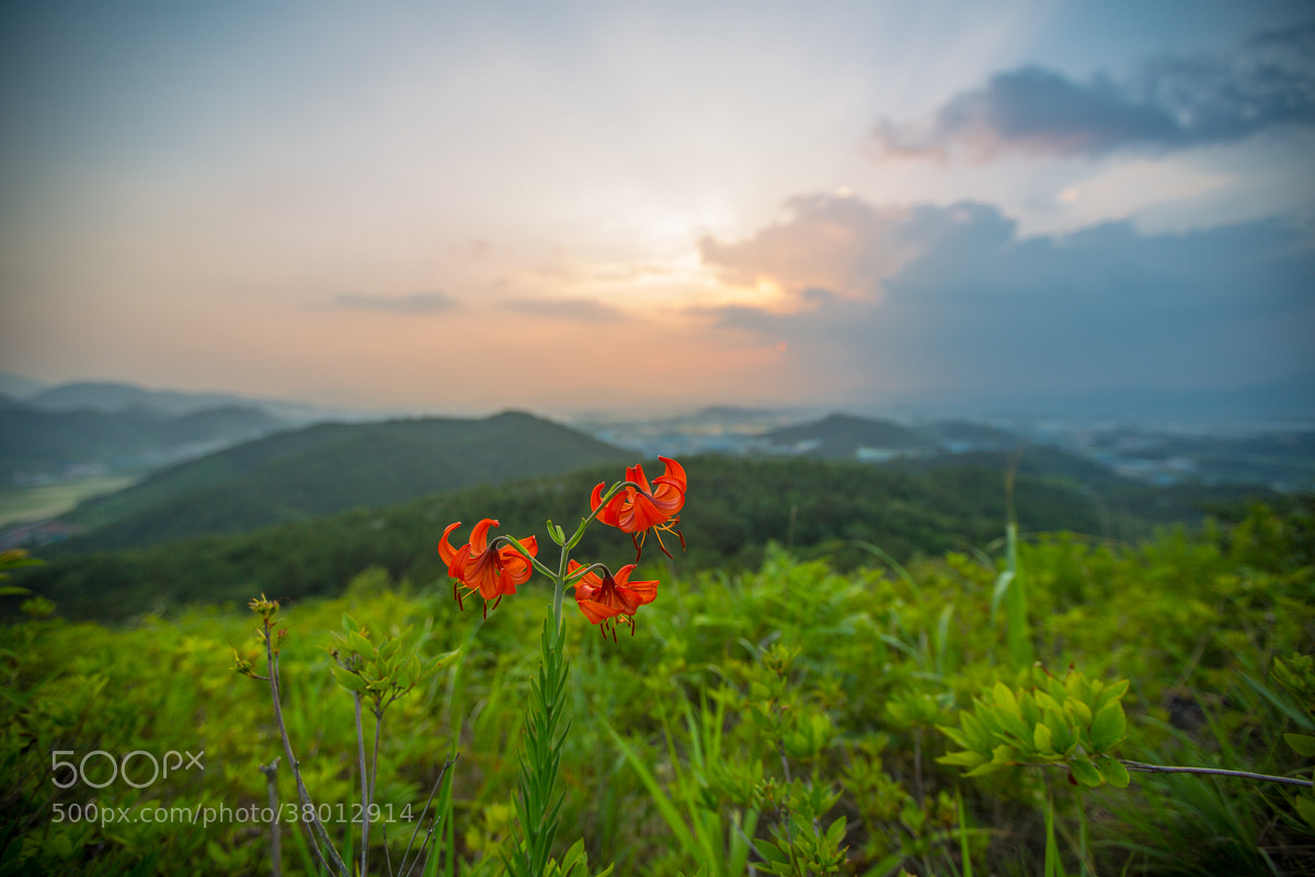 Photograph Flowers at sunset by Lee Kyeong Hwan on 500px