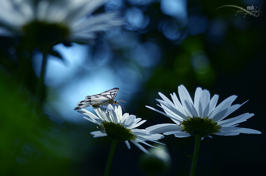 Photograph ~When purity meets perfection~ by Mohan Duwal on 500px