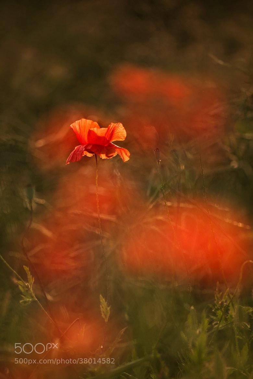 Photograph * by Éva Szombati on 500px