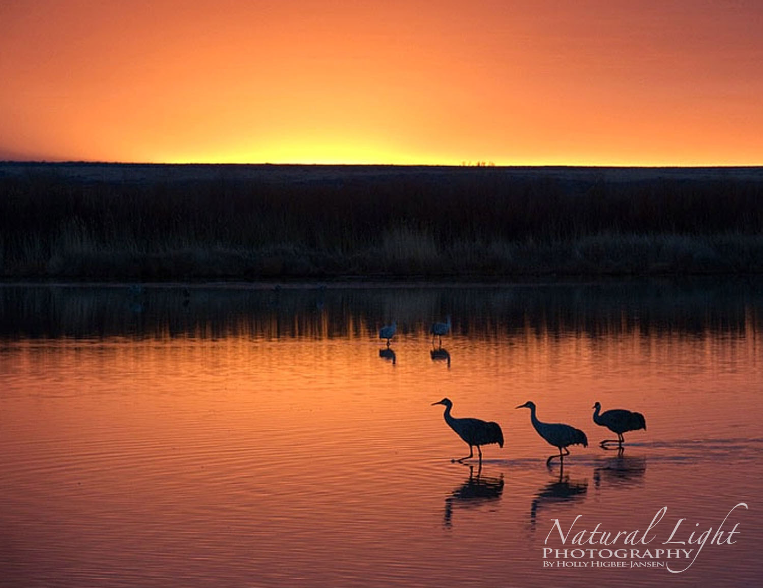 Photograph Bosque Morning by Holly Higbee-Jansen on 500px