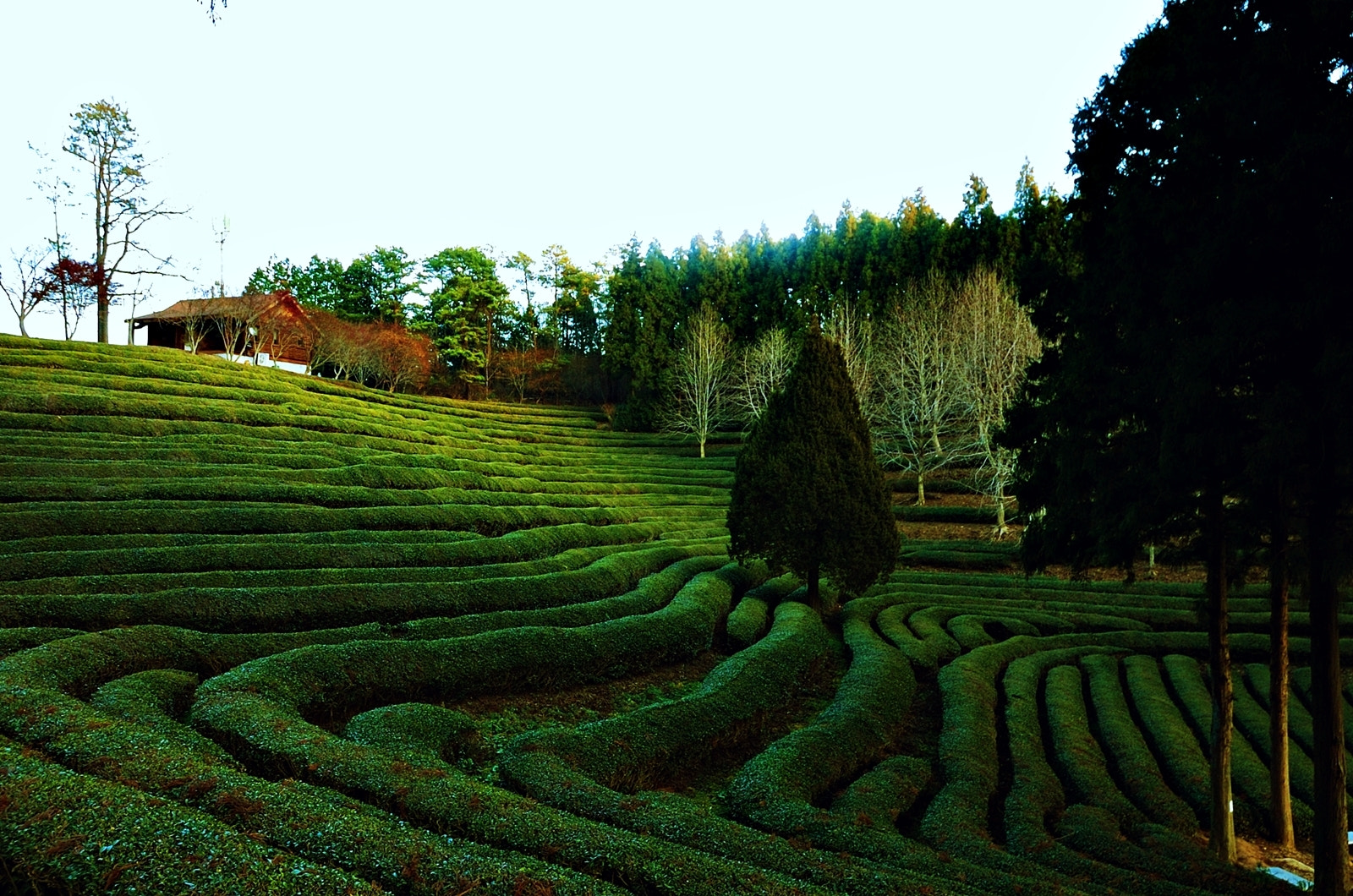 Photograph Green Land~* by RYNTEN  on 500px