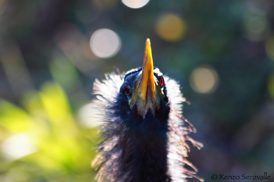 Photograph How do I look? by Renzo  Seravalle on 500px