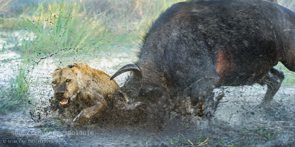 Photograph Enemies by Wim van den Heever on 500px