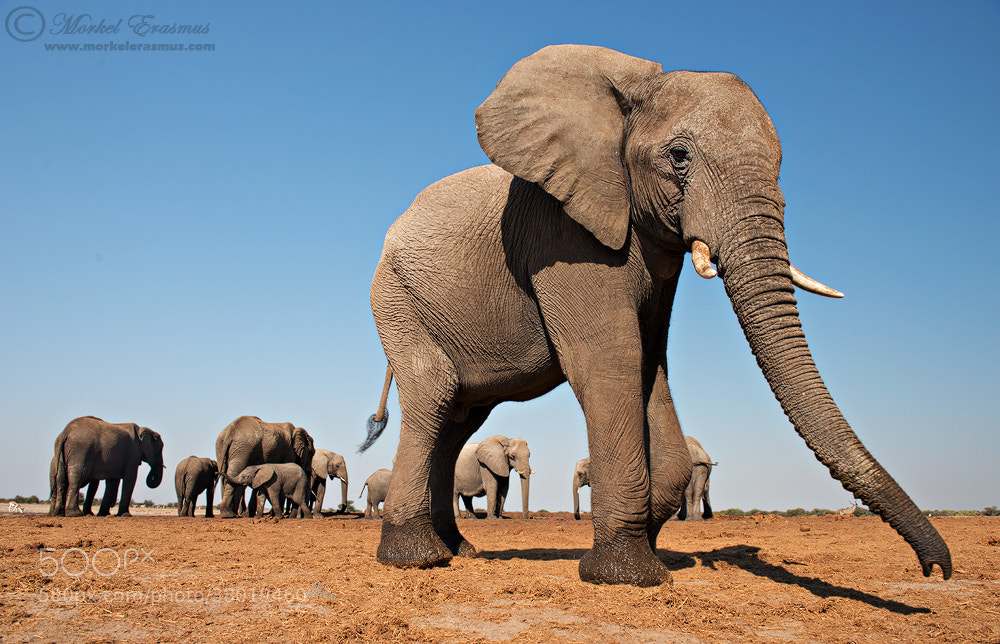 Photograph Too close for comfort by Morkel Erasmus on 500px