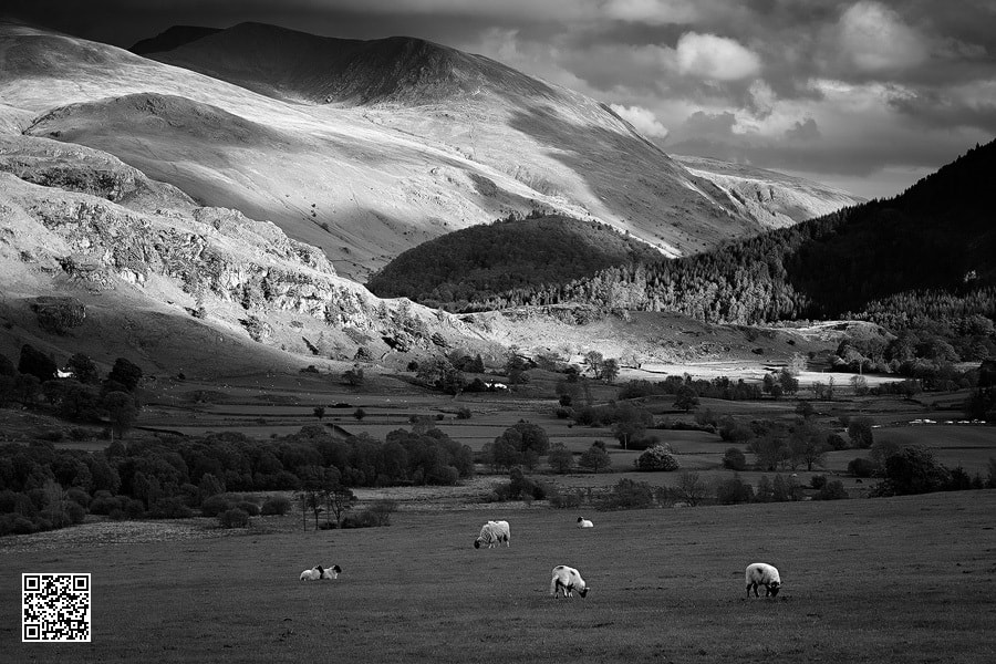 Photograph High Rigg Highlights by Paul Sutton on 500px