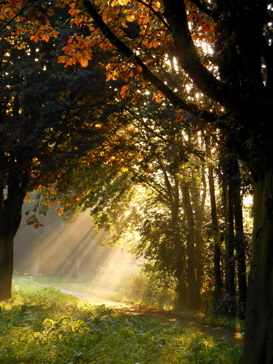 Photograph Sunrays in a dutch forest by Stehouwer and Recio on 500px