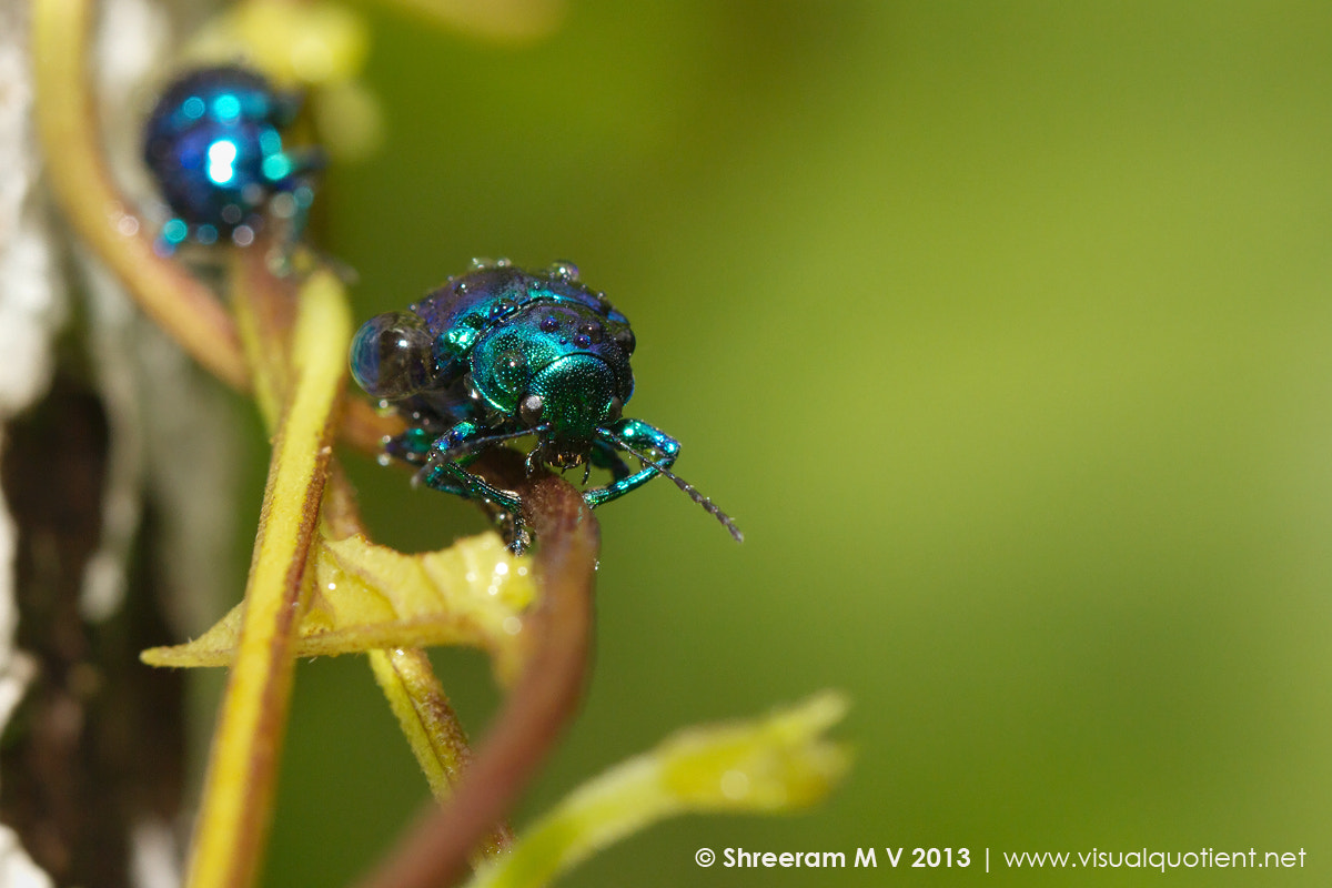 Photograph Beetles and Raindrops by Shreeram M V on 500px