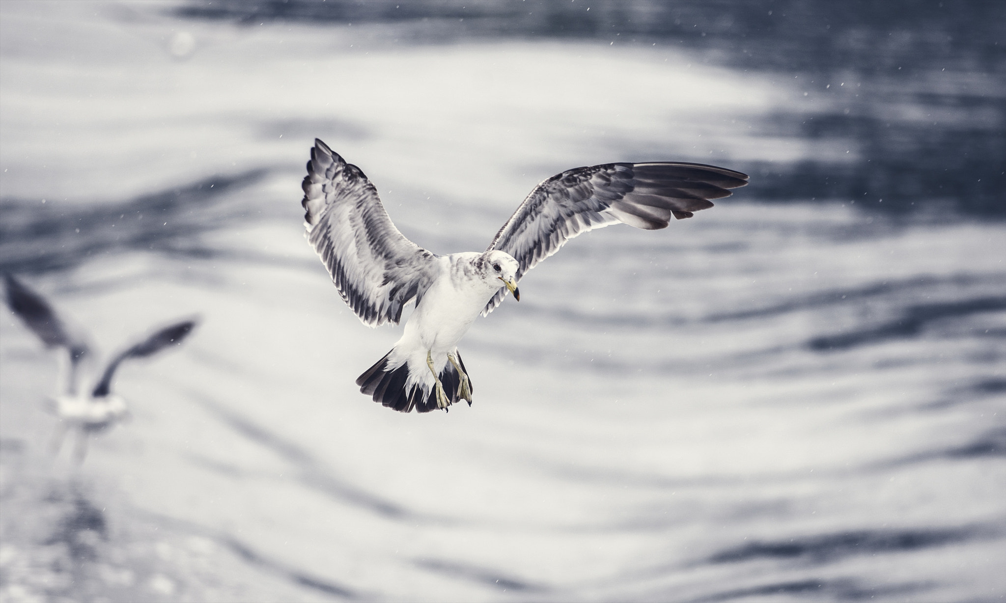 Photograph Free Spirit ~ by hugh dornan on 500px