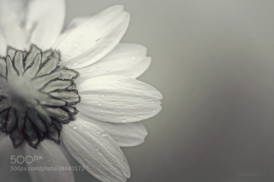 Photograph Flower by yavuzselimturan  on 500px