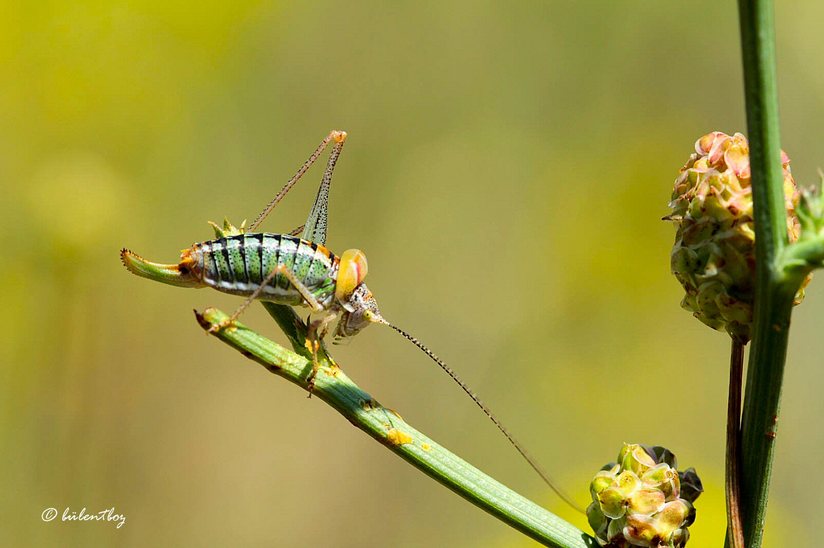 Photograph colors and the grasshopper 3 by Bulent Boz on 500px
