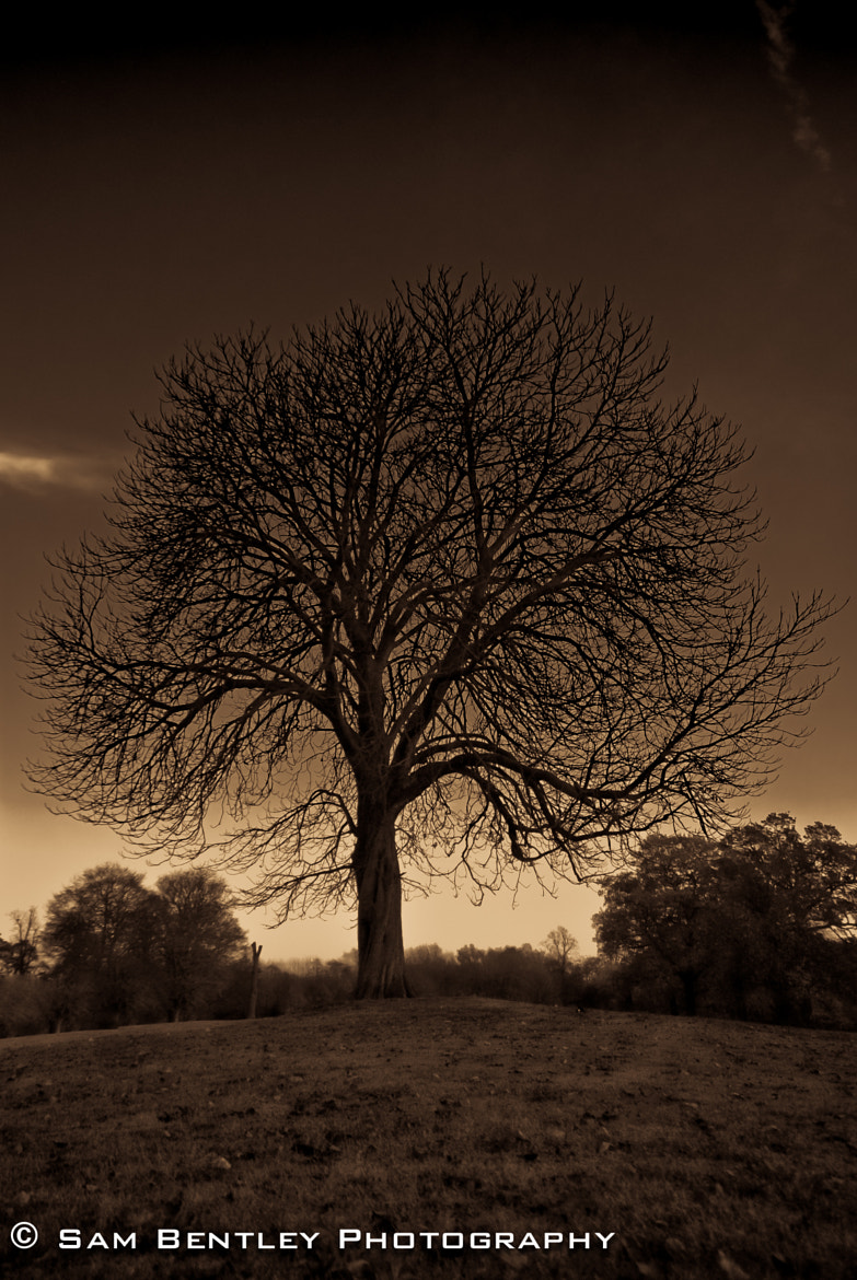 Photograph Derby Tree by Sam Bentley on 500px