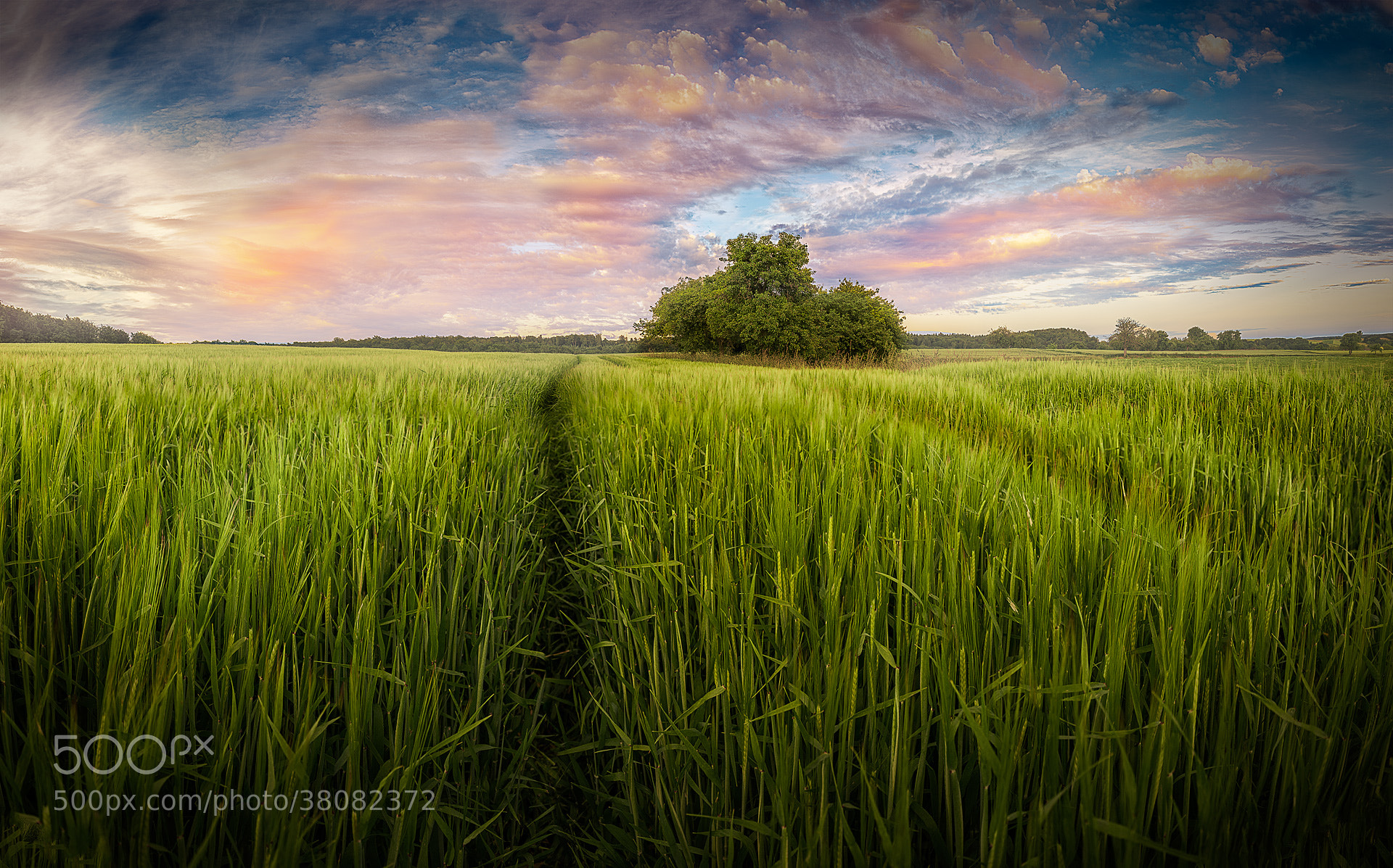 Photograph Sea of Green by Armin Barth on 500px