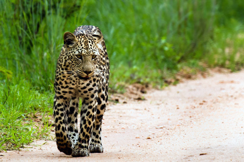 Photograph Casual Stroll by Wayne Holt on 500px