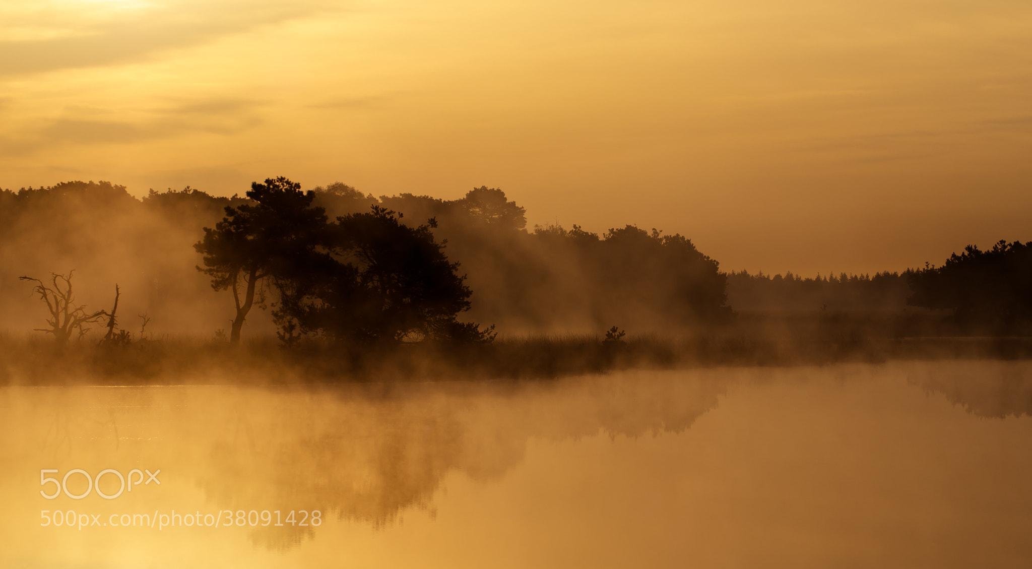 Photograph Strabrechtse Heide 110 by Mr. DESHAMER on 500px