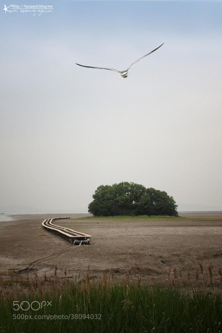 Photograph Gull's Island by kim seong-geun on 500px