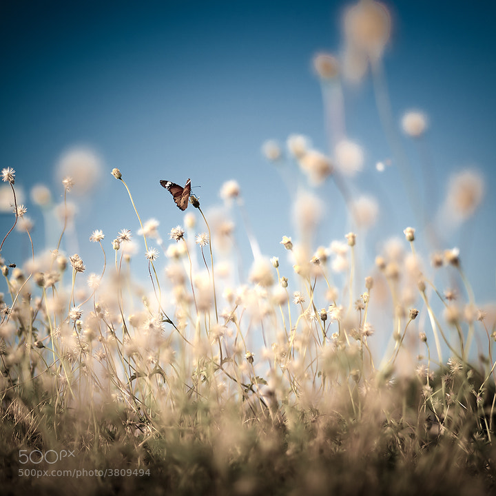 Photograph Butterfly :] by Mottoboy :] on 500px
