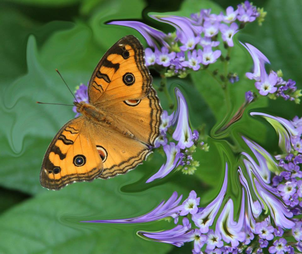 Photograph Liquifed flowers and Butterfly   by Paul Wyman on 500px