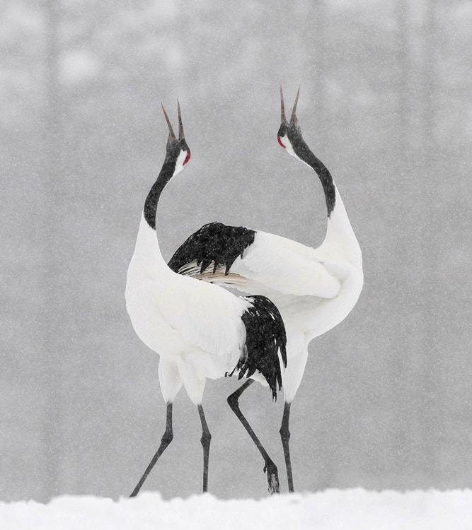 Photograph Snow Dance by Harry  Eggens on 500px