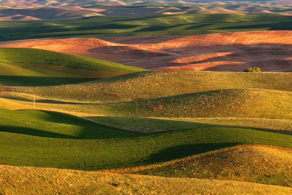 Photograph Morning Light in the Palouse by Michael Wewer on 500px