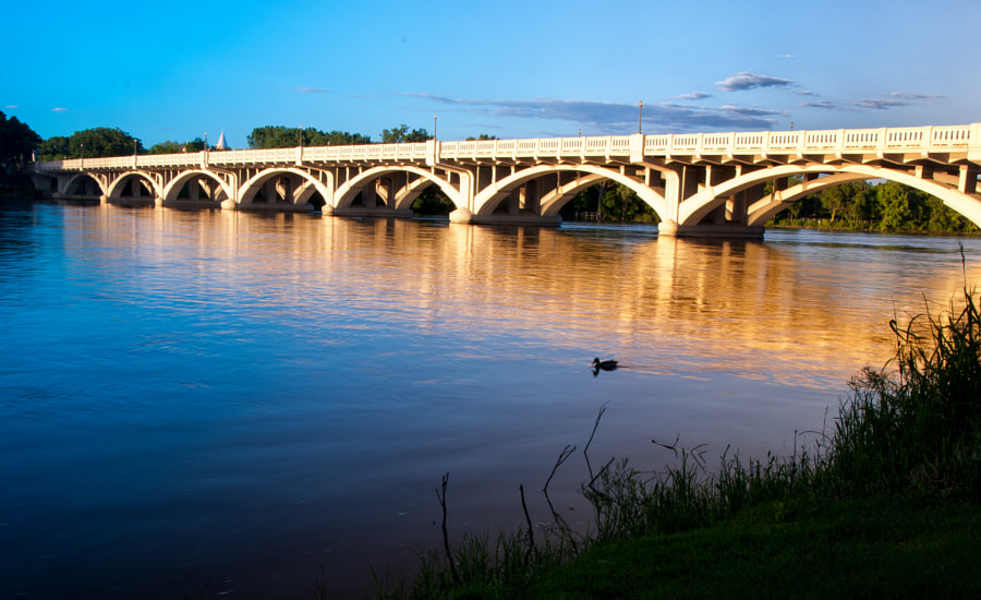 A lone duck swims upstream on a peaceful summer evening