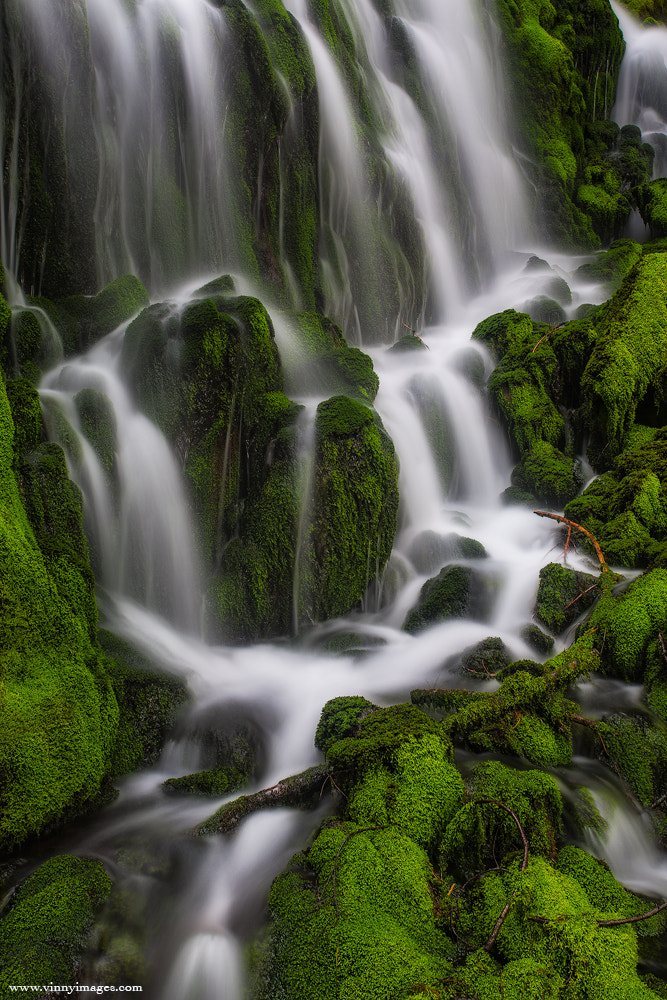 Photograph Mossy Goods by Vinny Pickens on 500px