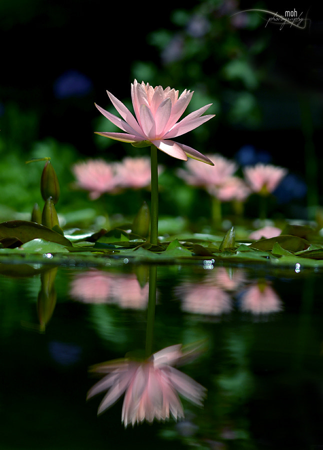 Photograph ~Reflected Living~ by Mohan Duwal on 500px